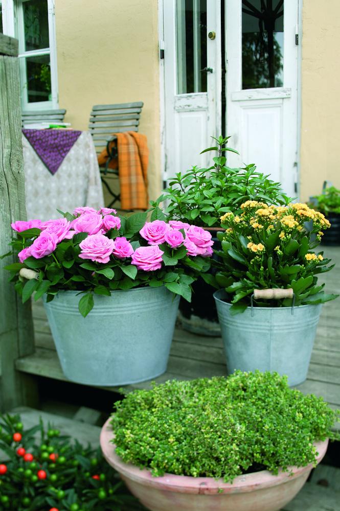 Planter i krukker   home & garden